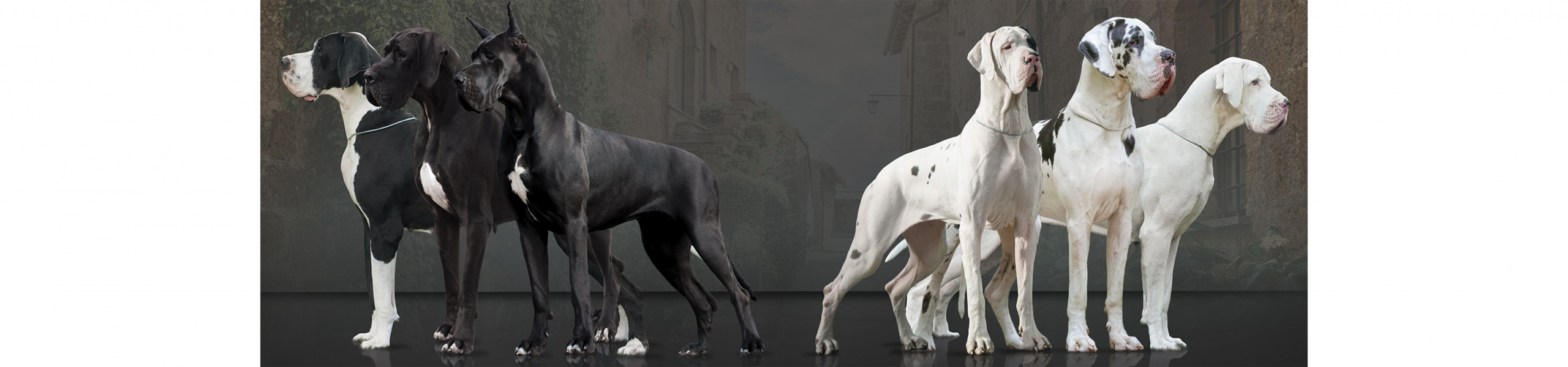 Great Dane Kennel